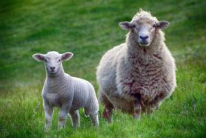 Visit a farm | Family activities for the Easter Holidays
